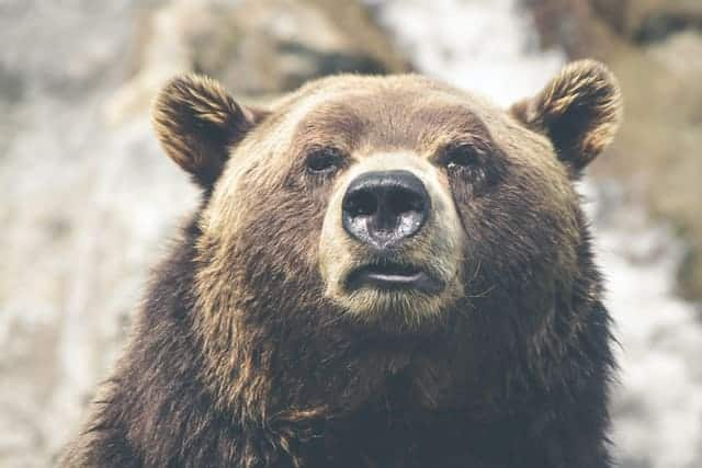 A picture of a grizzly bear. Our Bear is our flight or fight response, he controls how was think, act and feel. By being in control of your bear, your are in control of your thoughts and feelings
